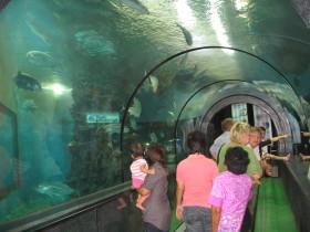 プーケット水族館