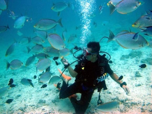 ラチャヤイ島で体験ダイビング